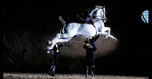 Espectáculo de caballos en Jerez