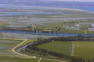 Arrozales del Delta del Ebro
