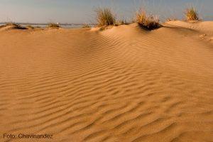 Playa con dunas en Delta del Ebro