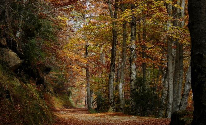 Bosque de la Sierra Cebollera, en Villoslada de Cameros, en La Rioja