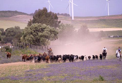 Ganadería de toros bravos y caballos de Álvaro Domecq
