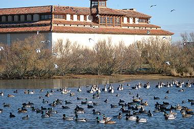 Lagunas de Villafáfila, provincia de Zamora