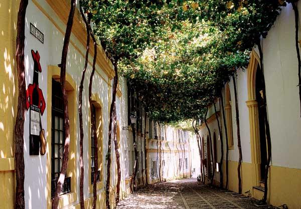 Calle emparrada de antiguas bodegas Tío Pepe, en Jerez de la Frontera, Cádiz